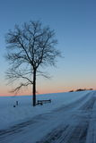 Sentinela do nascer do sol Fotografia de Stock