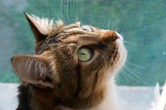 Sentinella del basamento del gatto Fotografie Stock