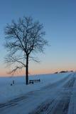 Sentinella di alba Fotografia Stock
