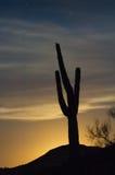 Sentinelle de lever de la lune Photos stock