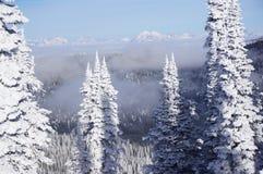 Sentinelle del fantasma della neve: Il pesce bianco ricorre alberi di Natale affollati bianchi fotografia stock libera da diritti