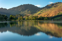 The Sentinels, Buttermere, Lake District, UK. Row of Pine Trees reflecting in water at Buttermere in the English Lake District on an Autumn morning stock image