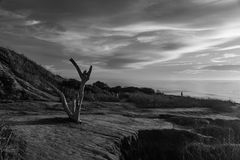 Sentinels over Sunset Cliffs. A dead tree and people at Sunset Cliffs, San Diego, California Royalty Free Stock Images