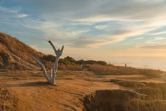 Sentinels over Sunset Cliffs. A dead tree and people at Sunset Cliffs, San Diego, California Stock Photo