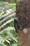 Sentipede стоковая фотография rf