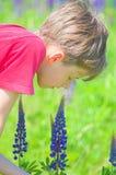 Sentire l'odore del fiore Fotografia Stock Libera da Diritti