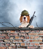 The sentry dog with gun Stock Photo