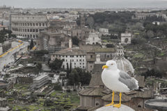 Sentry Seagull in Rome Royalty Free Stock Photos