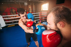 Sents del boxeador su opositor al golpe de gracia Imagenes de archivo