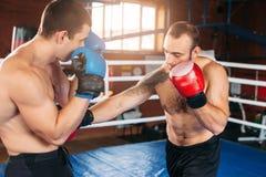 Sents del boxeador su opositor al golpe de gracia Imagen de archivo libre de regalías