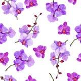 ` Senza cuciture dell'orchidea del ` del modello dell'acquerello fotografia stock libera da diritti