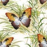 Senza cuciture floreale d'annata su fondo bianco con le rose, la farfalla ed i fiori selvaggi, illustrazione dell'acquerello di v Fotografia Stock