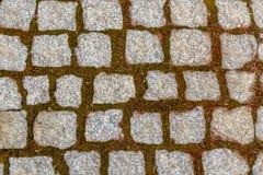 Senza cuciture piastrellare struttura cobbled della strada Fotografia Stock