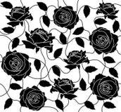 Senza giunte nero della Rosa Fotografia Stock