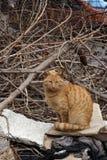 Senzatetto, disposizione dei posti a sedere smarrita del gatto dell'arancia in un cortile abbandonato Fotografia Stock