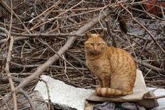 Senzatetto, disposizione dei posti a sedere smarrita del gatto dell'arancia in un cortile abbandonato Immagine Stock