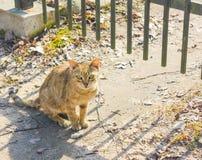 Senzatetto, gatto smarrito che si siedono dal recinto e sguardi fissi Immagini Stock