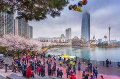 SEOEL, KOREA - APRIL 5, 2015: toerist in de lente met kersenblos Royalty-vrije Stock Fotografie