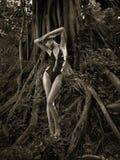 Señora agraciada en un árbol poderoso Fotos de archivo libres de regalías