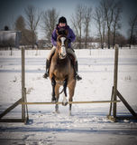 Señora joven que salta su caballo en invierno Fotografía de archivo