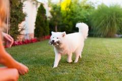 Señora que juega con su perro Imagenes de archivo