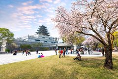 Gyeongbokgung Palace with Cherry Blossom in Spring Travel of korea, April 10, 2016 in Seoul, South Korea. Stock Photography
