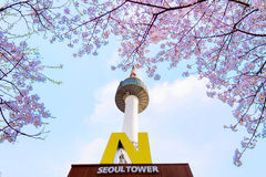 SEOUL - APRIL 9 : N Seoul Tower  and Cherry blossom in Spring. Royalty Free Stock Photo