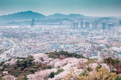 Seoul cityspace with cherry blossoms in Korea. Seoul cityspace with cherry blossoms from Namsan Seoul tower in Korea royalty free stock photography