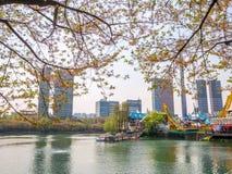 SEOUL, COREIA - 17 DE ABRIL DE 2018: Parque e flor de cerejeira de Lotte World Seokchon Lake no seasson do verão em Seoul, Coreia Imagem de Stock