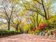 SEOUL, COREIA - 17 DE ABRIL DE 2018: Parque e flor de cerejeira de Lotte World Seokchon Lake no seasson do verão em Seoul, Coreia Fotos de Stock Royalty Free