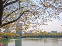 SEOUL, COREIA - 17 DE ABRIL DE 2018: Parque e flor de cerejeira de Lotte World Seokchon Lake no seasson do verão em Seoul, Coreia Fotografia de Stock Royalty Free