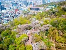 Seoul, Coreia do Sul 16 de abril de 2018: Vista em Seoul da montagem de Namsan na temporada de verão Cherry Blossoms sakura imagens de stock royalty free