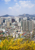 Seoul downtown top view with spring flowers Royalty Free Stock Image