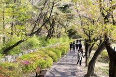 Seoul dröm parkerar/Korea - April 16, 2018 Folket i vår parkerar royaltyfria bilder