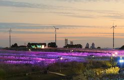 Seoul Eulalia Festival at Haneul Park Stock Images