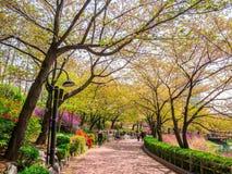 SEOUL KOREA - APRIL 17, 2018: Lotte World Seokchon Lake parkerar och den körsbärsröda blomningen i sommarseasson i Seoul, Sydkore arkivbild
