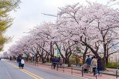SEOUL,KOREA - APRIL 7 : Seoul cherry blossom festival. Stock Image
