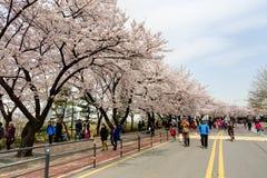 Seoul pring flower festival Stock Image