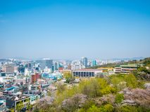 Seoul,South Korea- April 16, 2018: View on Seoul from Namsan mount in summer season Cherry Blossoms sakura. stock image
