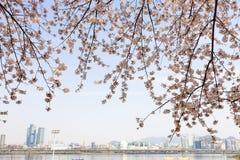 Seoul spring Royalty Free Stock Image