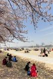 Seoul spring Stock Photo