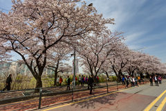 Seoul spring Stock Photography