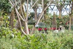 Seoul Sydkorea - 4 februari 2019: inom sikt av det botaniska växthuset av Seoul parkera, seoul, Sydkorea arkivfoton