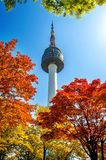 Seoul Tower and red autumn maple leaves at Namsan mountain in Korea. Royalty Free Stock Photo