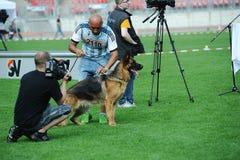 SEP 07, 2014 Nurnberg Biggest german shepherd dog show in German Royalty Free Stock Photo