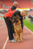 SEP 07, 2014 Nurnberg niemieckiej bacy Duży psi przedstawienie w niemiec Fotografia Stock