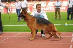 SEP 07, 2014 Nurnberg niemieckiej bacy Duży psi przedstawienie w niemiec Zdjęcia Stock