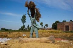 Separación de granos del arroz Foto de archivo libre de regalías