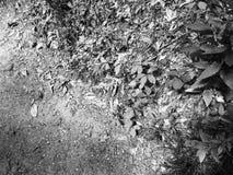 Separación de la hierba/de la suciedad Imagen de archivo