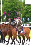 Separación del caballo Fotografía de archivo libre de regalías
